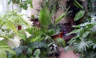 Як розмістити кімнатні квіти і рослини в квартирі