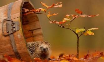 Прислів`я та приказки про осінь для дітей