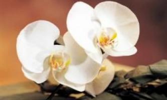 Прислів`я та приказки про рослини