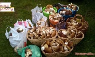 З лісу з грибами