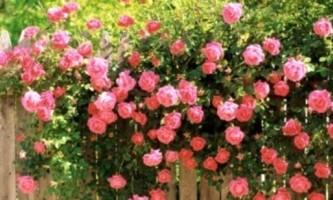 Кучеряві рослини для саду: любов з першого погляду